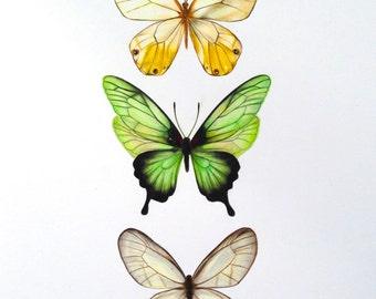 butterfly art - butterfly illustration - art prints  - nursery art prints - wall art