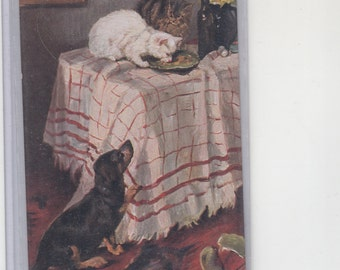 Cats On Table -Dachshund Watches-Antique Postcard,Dachshund Dog-Cats 1910-Artist Signed