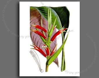 "Exotic Tropical Flower, Tropical botanical art print, Heliconia Print #2 Tropical island home decor wall art print, 8x10"" botanical art"