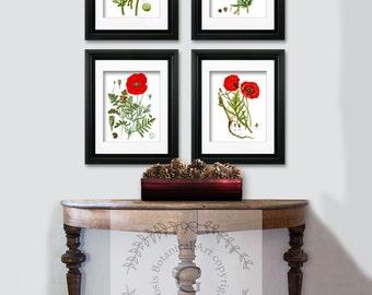 Memorial Day decor BOTANICAL Print SET of 4 Art Prints Beautiful Red White Papaver Opium Poppy Antique VintagePainting Flower Chart