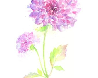 Fine art watercolor painting, flower art, pink, purple, CHRYSANTHEMUM WATERCOLOR PRINT, giclee print, flower interest
