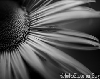 Fine Art Black and White Nature Photography 'Sunflower' Photograph Print 7x5, 8x10 or 20x16 Wall Art Home Decor