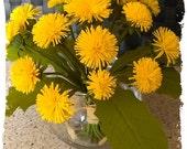 Dandelions. The Golden sun of my childhood..