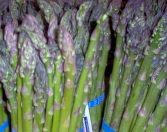 50+ Asparagus Seeds- Mary Washington
