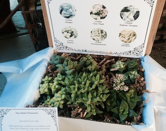 The Crassula Box. Succulent Treasures Candy Box. Half Dozen Assorted Crassula Family succulent gift box.