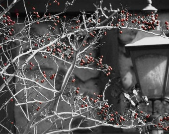 Winterberries, Winter Landscape, Berry Bush, Winter, Outdoor Photography, Nature Photography