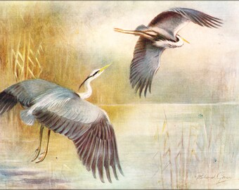 24x36 Poster; Roland Green Herons 1922