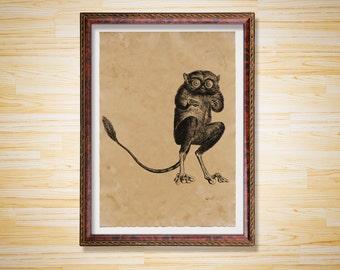 Tarsier print Wildlife decor Animal poster