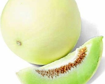200 Seeds Green Flesh Honey dew Melon Seeds Honeydew