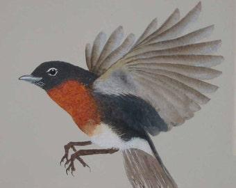 BIRD PRINT, ROBIN Art Print, From My Original Acrylic Painting