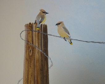 CEDAR WAXWINGS ART, Print, Bird Print, From My Original Acrylic Paintings