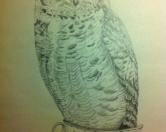 OWL- Graphite Illustration