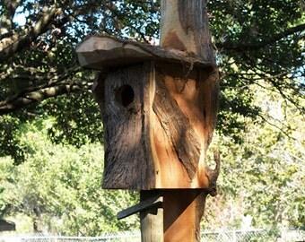 Screech Owl/Kestrel Box