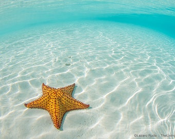 Orange Sea Star in the Beach Fine Art Underwater Photograph Print