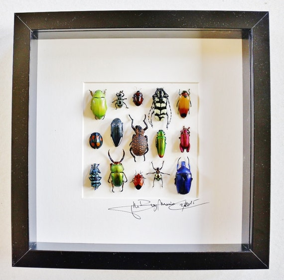 Artframe with real insects : Topquality display with beautiful insects of the world FREE SHIPPING