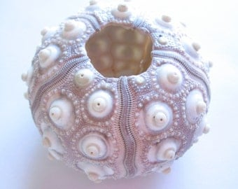 "Sputnik Sea Urchin 2""-qty 2-Beach Home Decor-Sea Urchin-Beach Wedding Decor-Sea Shells-Sea Urchin-Nautical Decor-Urchin Bulk-Urchin Accents"