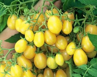 Ildi Tomato seeds
