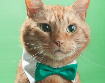 Emerald Green Bow Tie for Dogs & Cats