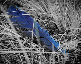 Blue Feather in Grass Fine Art Photograph Print Size 5 inches by 7 inches