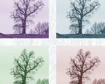 Trees photograph in four colours, Photograph, print