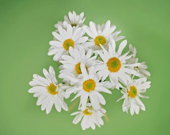 Bunch of Daisies Photo, Black & White, Flower, Wall art, Bunch of Flowers, color, green