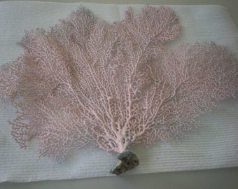 Sea Fan dyed Ballet Slipper color  (Ea).