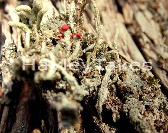 Lichen Moss Norfolk Broads Woodland Download Photographic Print 20cm
