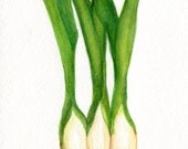 Green Onions watercolors paintings original. vegetable kitchen decor, onions original watercolor painting, small vegetable wall art 5 x 7