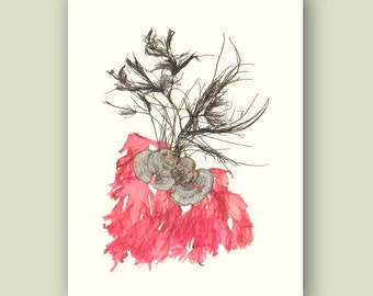 MADE TO ORDER Seaweed Print, Pressed seaweed, Seaweed art,  Victorian Botanicals, decorative arts, coastal beach cottage, educational