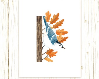 White-Breasted Nuthatch Print -- bird art -- colorful bird art 52 birds stephanie fizer coleman illustration