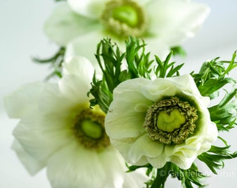 Instant download  photography  white flowers  Anemones in white // jpg file / home decor / wall art / spring flowers