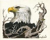 Eagle's View - animal realistic bird illustration