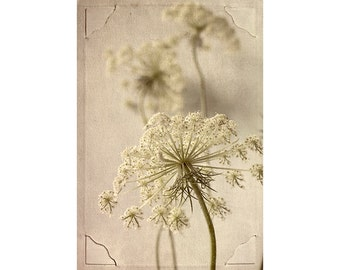 Queen Annes Lace Print,   Botanical Print,  Sepia Photography, Cottage Chic Decor, Flower Photography