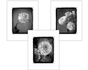 Three Matted Prints, Black and White Photography, Ranunculus Prints, 11 x 14 Mats, Flower Photography