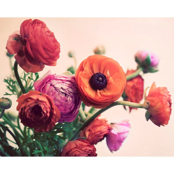 Still Life, Flower Photography, Ranunculus, Spring Print, Romantic, Pink, Apricot, Floral, Mothers Day, Soft, Dreamy, Wall Art, Home Decor