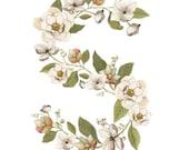 "Floral Monogram Art Print - House Warming Gift - Monogram Home Decor - ""Kent Rose & Dogwood Botanical"" by Alicia's Infinity"