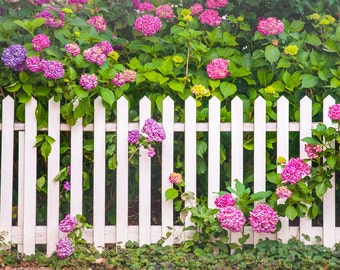 White Picket Fence, Colorful Flowers. Peacful Spring Day, Cottage Chic, Beautiful Morning