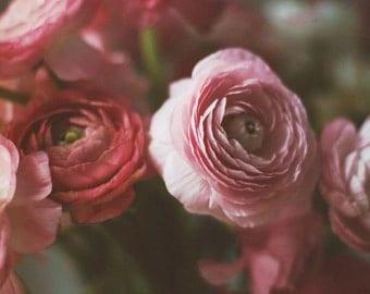 Still life photography - ranunculus flowers - deep tones rich color dark photography romantic flowers home decor  fine art home deep pink