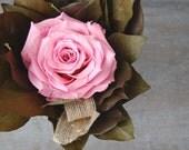 Preserved pink rose with lemon leaf - large