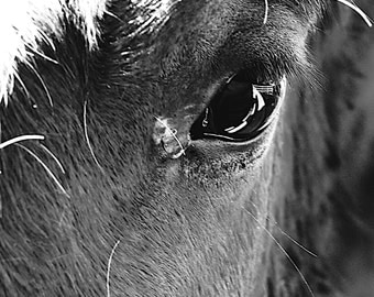 The Eye - Old Farm Horse Window To The Soul of A Lovely Horse love Farm autumn harvest Nature decoration Fine Art Photo Print