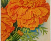 MARIGOLD! (Guinea Gold) Vintage Flower Seed Packet Tuckers Seed House Lithograph (Carthage, Missouri)