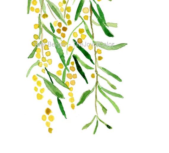 Art print Mimosa, Mimosa watercolor, Yellow, Peridot green,  Botanical art, Mimosa print, fresh home decor, limited edition art