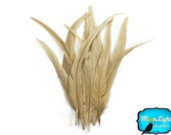 "Rooster Tail Feathers, 10 Pieces -  14-16"" IVORY Bleach Long Coque Tails Feathers : 3746"