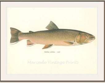 Vintage Fish Print, 1970, The Alpine Char Salvelinus, male (43) Fresh Water, Jiri Maly, Ichthyology,