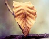 Fall Photography : Autumn Leaf Wall Decor, Etsy Wall Art - All That Remains - harvest gold, indigo, rustic home decor