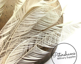 10 Zippered Goose Biot Feathers for Millinery and Hat Trimming - Ivory