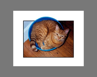 Orange Cat Card Photo Card Orange Tabby in the Blue and White Bowl