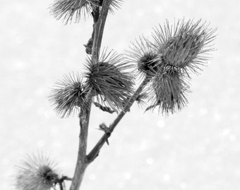 ACEO Thistle in Winter