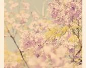 jacaranda tree photograph, photography, purple nursery art, Los Angeles blooms, blossoms powder blue spring delicate babys room print