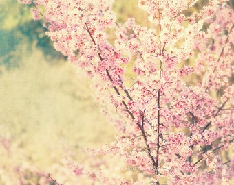 nature photography, cherry blossom tree photo, babys nursery art, pink mint green, photograph, spring, bloom pastel girls room print